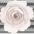 Positively Happy White Rose Flower