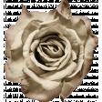 My Tribe Cream Flower