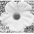 My Tribe White Flower