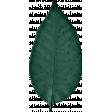 Nesting Green Leaf