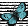 Retro Picnic Butterfly