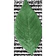 Retro Picnic Green Leaf