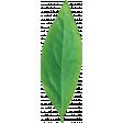 Peach Lemonade Leaf