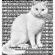 Furry Cuddles Cat