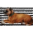 Furry Cuddles Dog