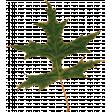 Furry Cuddles Leaf 1