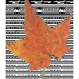 Mulled Cider Leaf 02