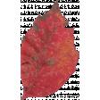 Mulled Cider Leaf 03