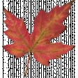 Mulled Cider Leaf