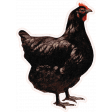 Chicken Keeper Element Sticker Hen