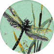 Naturally Curious Dragonfly Round Sticker