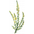 Naturally Curious Plant