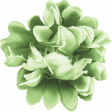 Garden Notes Green Flower 2