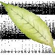 Sparkle & Shine Green Leaf