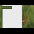 Camp Out Woods Deer Journal Card 4x6