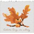 Sweet Autumn Leaf Ephemera