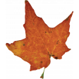 Sweet Autumn Orange Leaf