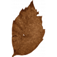 Sweet Autumn Tan Leaf