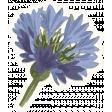 Chicory Lane Element Sticker Flower