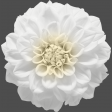 My Life Palette - Flower (Realistic White)