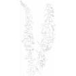 Foxglove Illustration