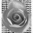 Flower 153 Template