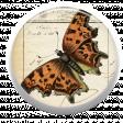 Orange Butterfly Brad