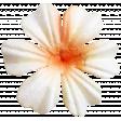 Self Love Elements Kit - Flower02