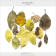 Leaves No.1