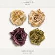 Flowers No.24