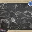 Chills & Thrills - Chalk Skeleton Stamp Kit 2