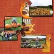 Pumpkin Patch - 2