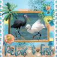 Birds Fiesta