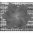 Pond Life Leaf Flower Template