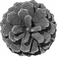 Outdoor Adventures - Element Template - Pine Cone Flower 01