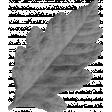 Spookalicious - Element Templates - Leaf 02