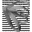 Leaf Template 007