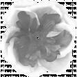 Flower Template 02