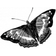 Butterfly Template 010