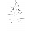 Nature Template 005
