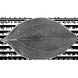 Leaf Template 028