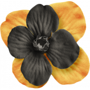 No Tricks, Just Treats-Orange And Black Flower