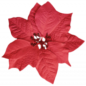 It's Christmas- Red Poinsettia