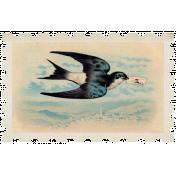 Sweet Valentine- Bird stamp