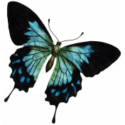 The Best Is Yet To Come- Butterfly