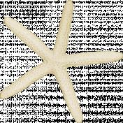 At The Beach- White Starfish