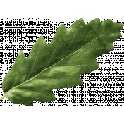 Outdoor Adventures- Little Leaf- Green