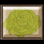 Lettuce Brad