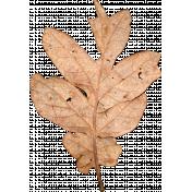 Fall Leaf 3