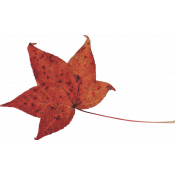 Fall Leaf 4